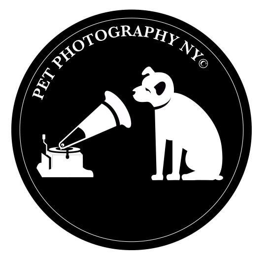 Pet Photography New York
