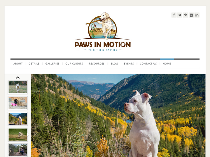 Paws in Motion Photography